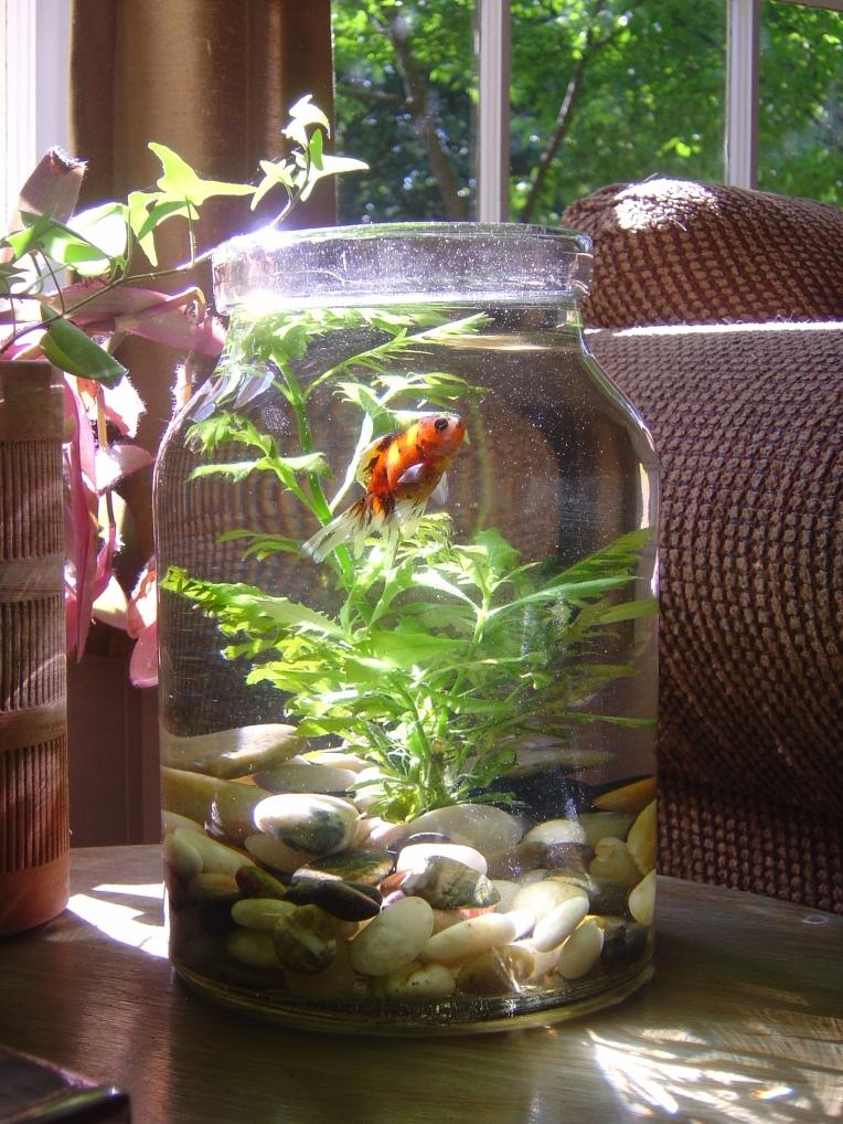 Abercrombie Fish