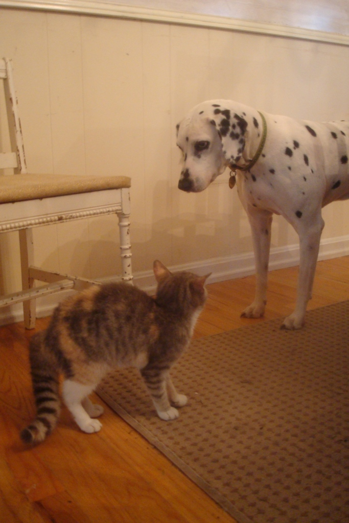 Kitten meets Dulcie