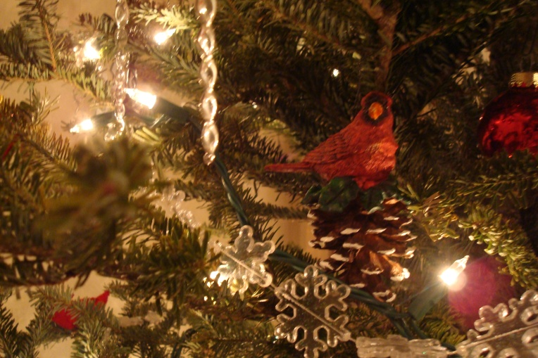 Close up of cardinal on our tree