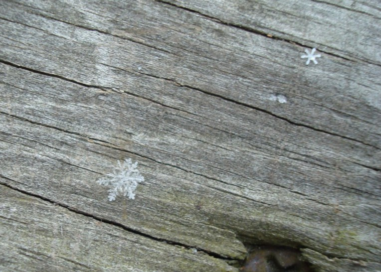 I took this photo when the snow just began to fall. There are two delicate flakes nested on top of each other and another beautiful one at the top of the shot.