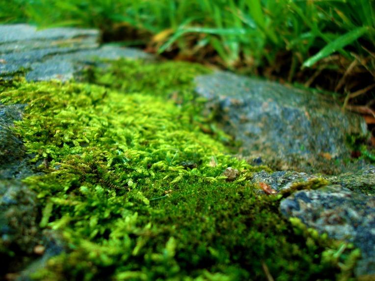 moss on the sidewalk near my home