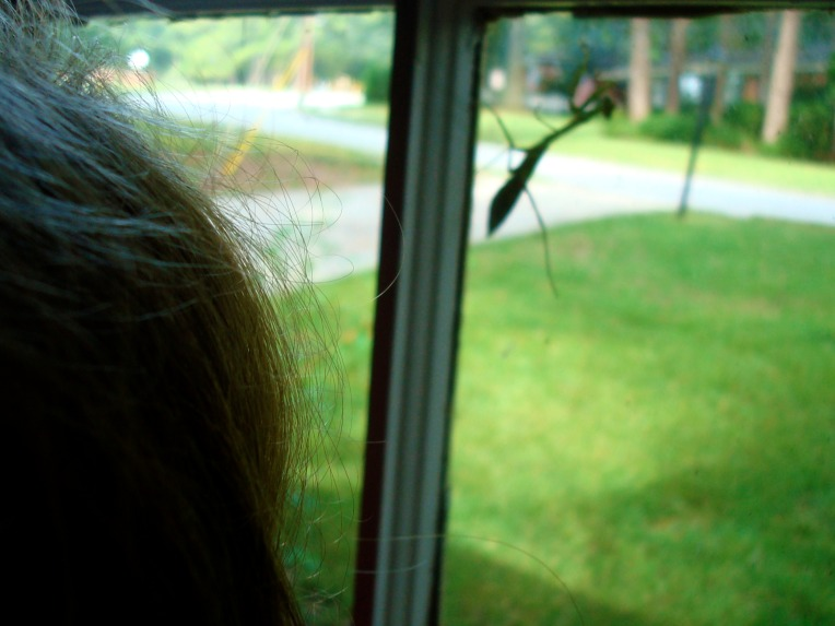 .... Joy finding a praying mantis on the bay window .....