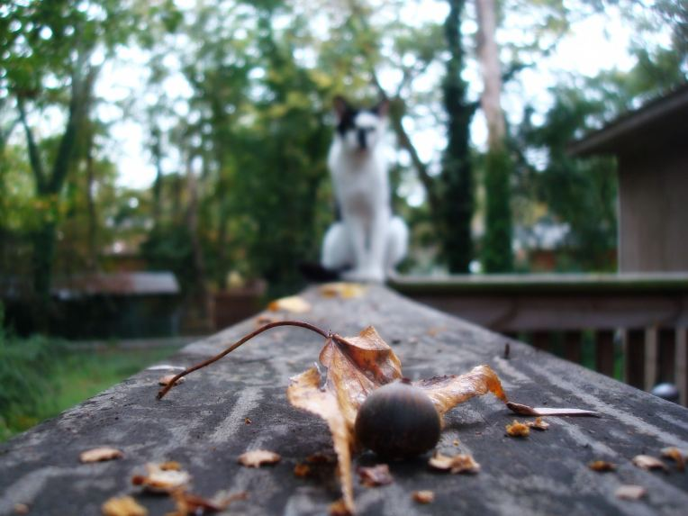 My Smudge-man ... on the deck rail