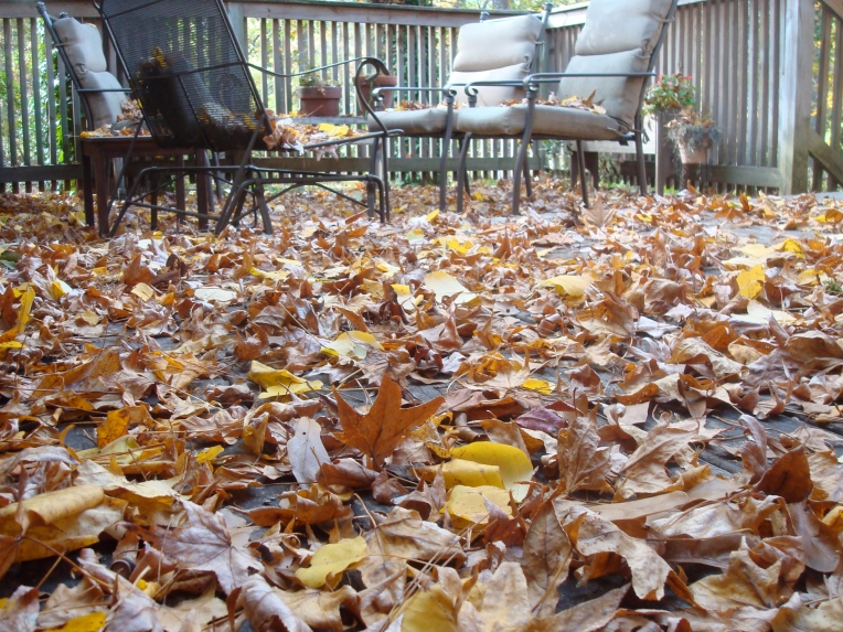 Leaves on my deck