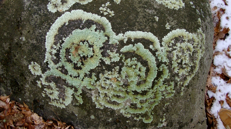 Lichen working to form a heart on a rock