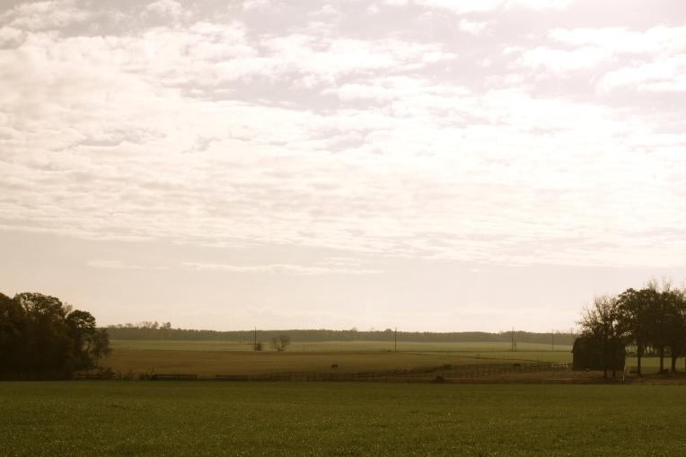 Georgia fields
