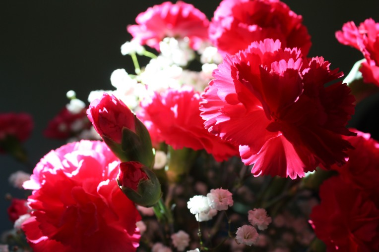 Carnations draped in light