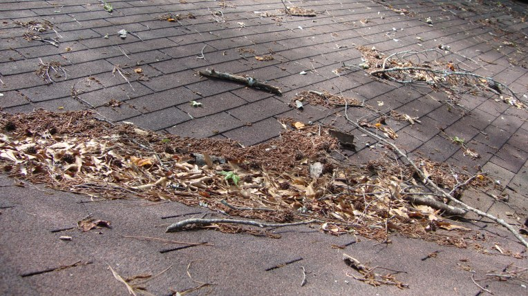Accumulated leaves are NOT good for your roof.