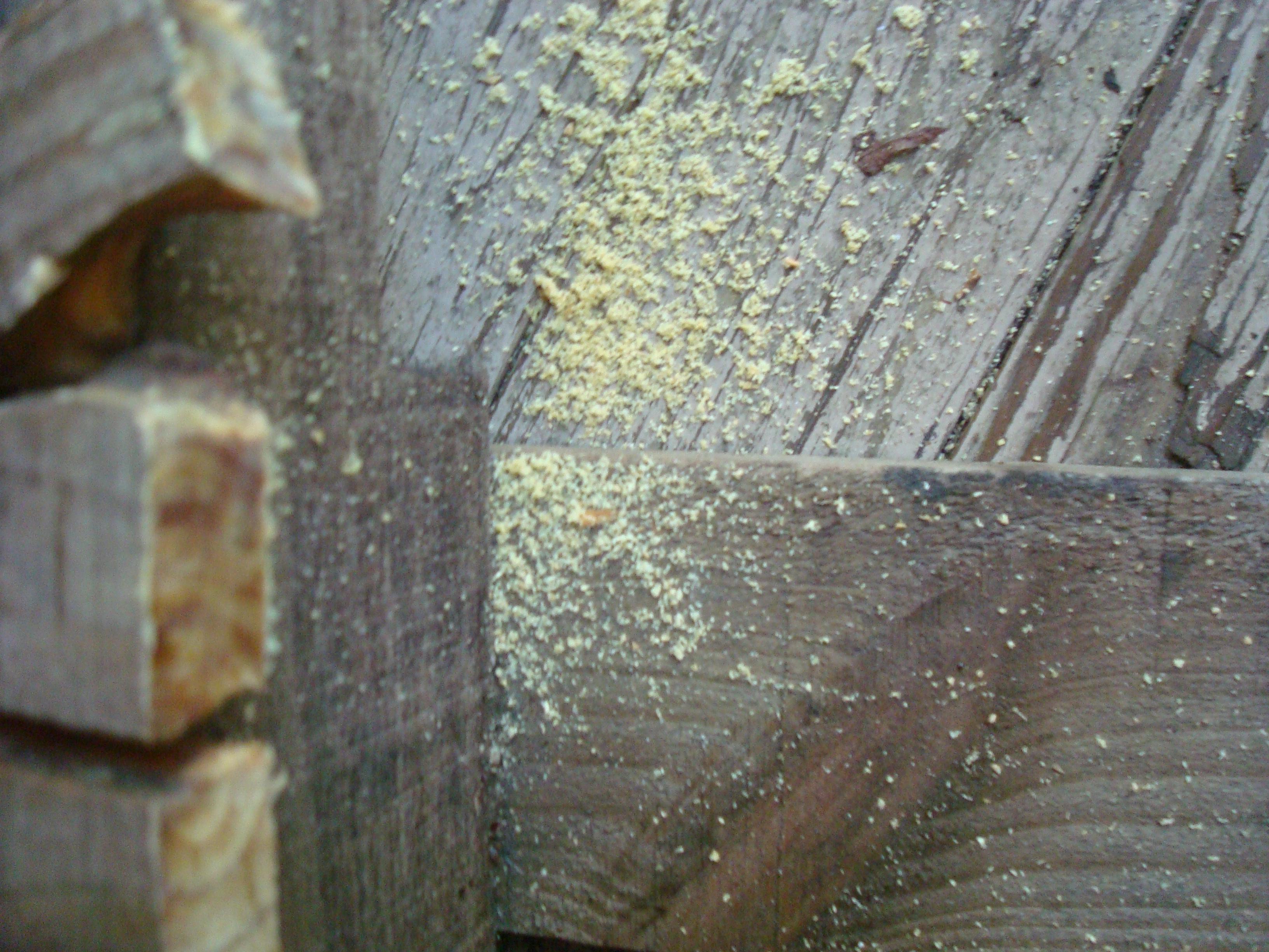 Do Termites Leave Sawdust ~ Mermaids the new evidence submarine imgkid