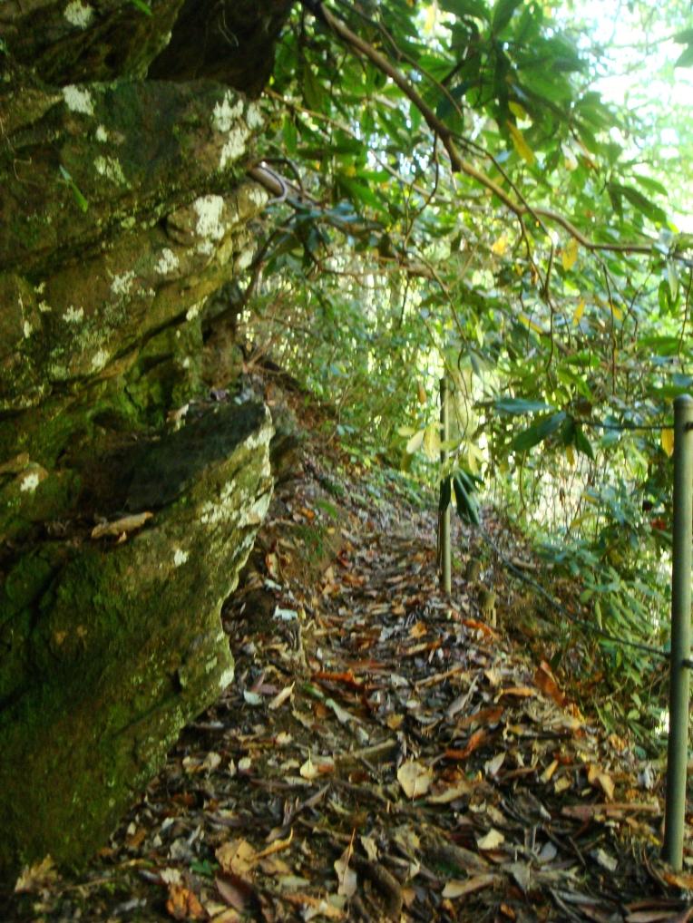 Panther Creek Hiking Trail