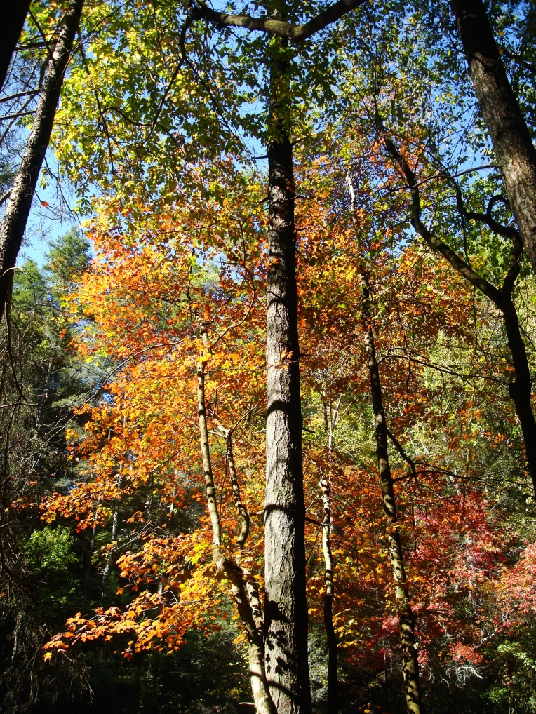 Autumn color along Panther Creek Trail