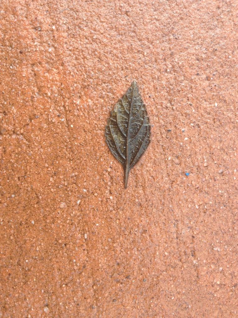 A tiny leaf.
