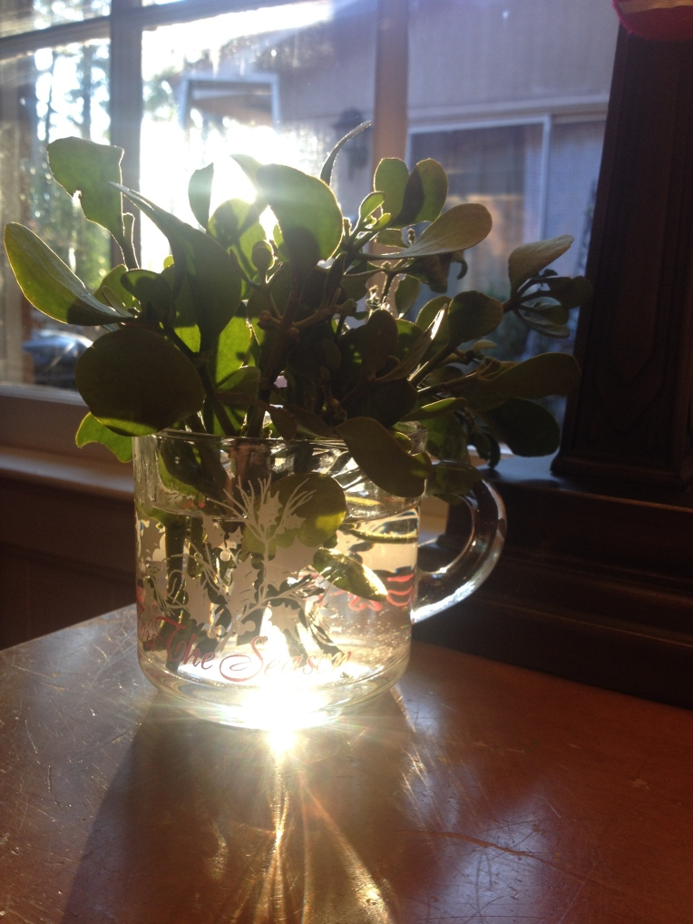 "Mistletoe in a ""vase"""