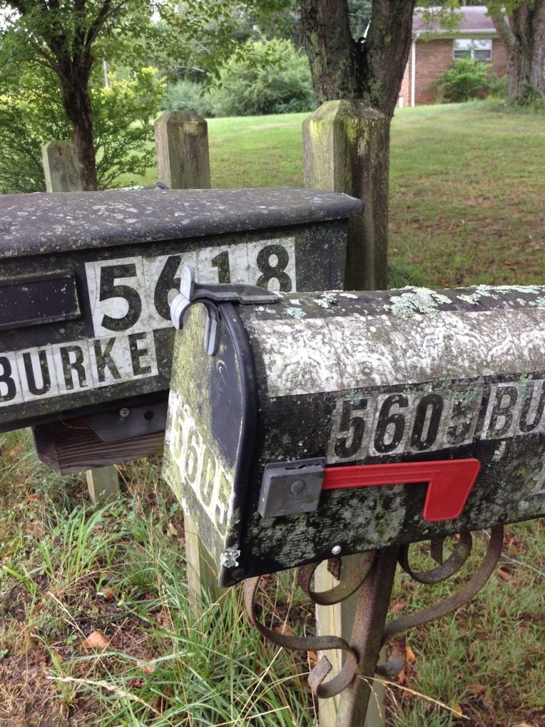 lichen on mailboxes