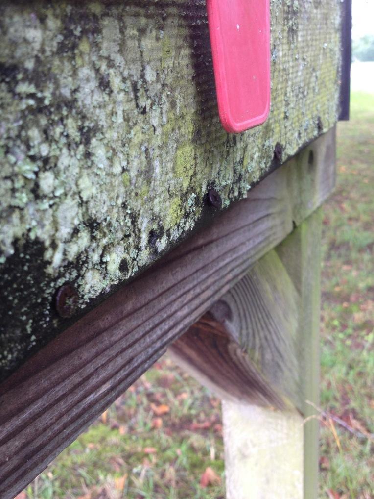 lichen on a mailbox